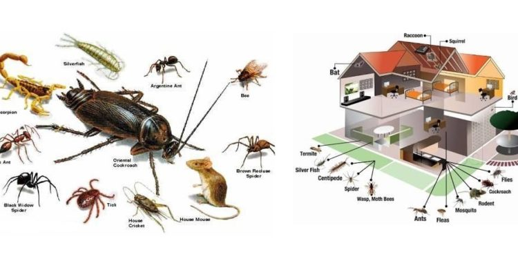 all pest control services