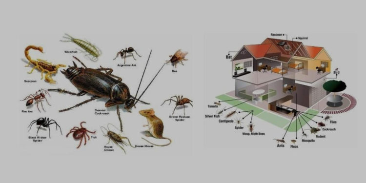 all-pest-control-services-side-service